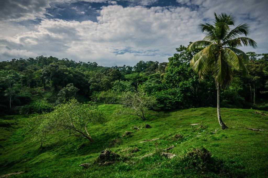 Vrchol kopce uprostřed džungle, kterou je nutno projít při cestě na pláž.