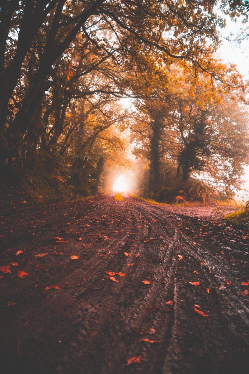 venkov listí