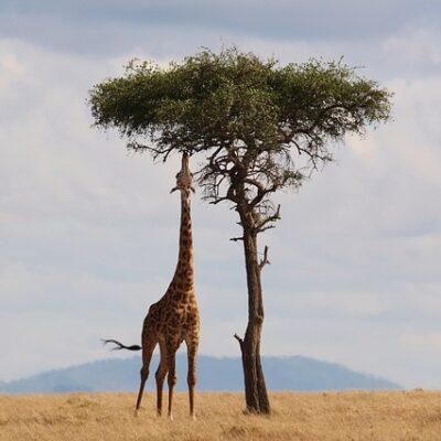 Bezpečné africké země a cestování