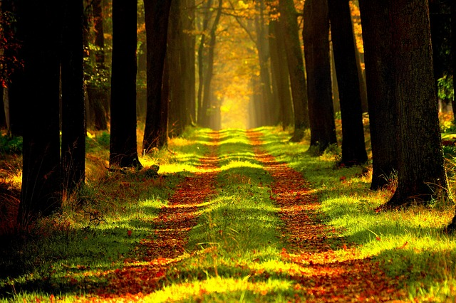 Procházka lesem jako součást psychohygieny