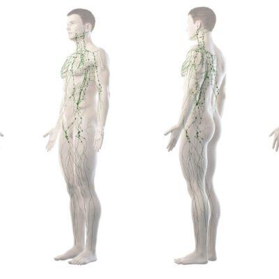 lymfatický systém člověka